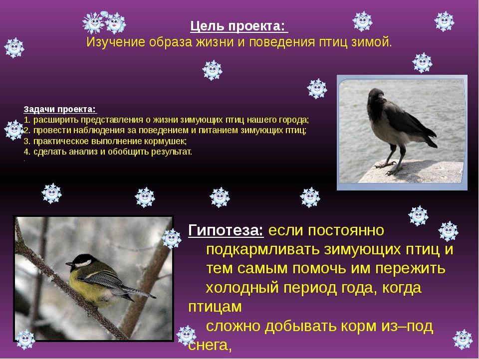 Цель проекта: Изучение образа жизни и поведения птиц зимой. Задачи проекта: 1...