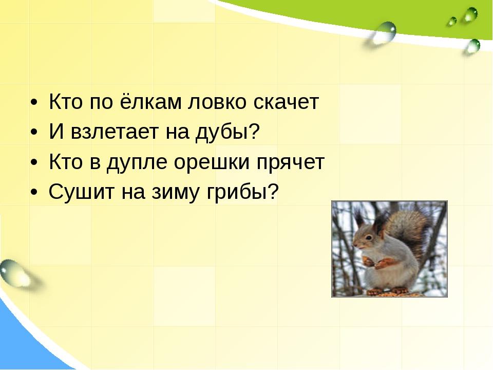Кто по ёлкам ловко скачет И взлетает на дубы? Кто в дупле орешки прячет Сушит...