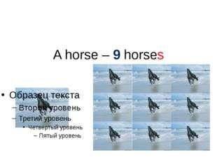 A horse – 9 horses
