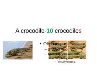 A crocodile-10 crocodiles
