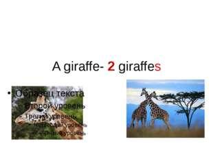 A giraffe- 2 giraffes