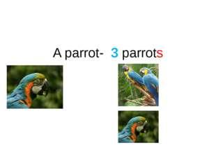 A parrot- 3 parrots
