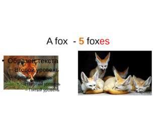 A fox - 5 foxes