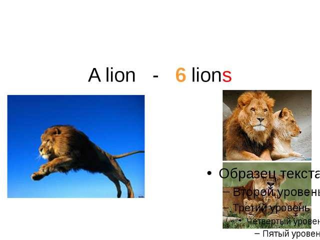 A lion - 6 lions