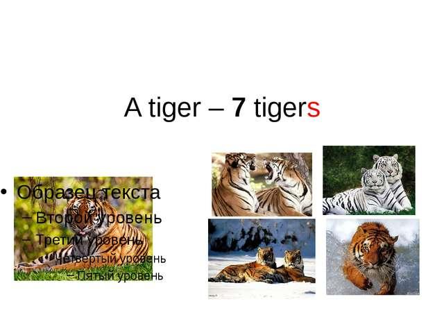 A tiger – 7 tigers