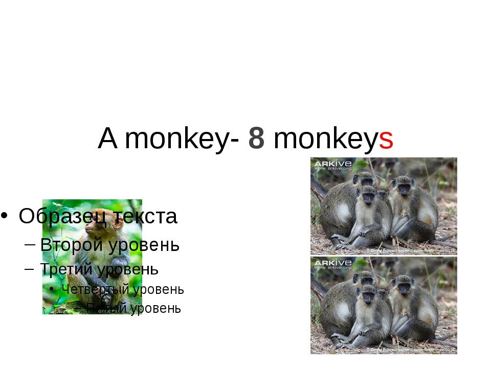 A monkey- 8 monkeys