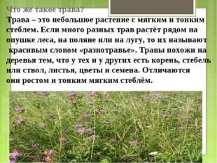 Что же такое трава? Трава – это небольшое растение с мягким и тонким стеблем.