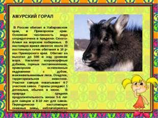 АМУРСКИЙ ГОРАЛ В России обитает в Хабаровском крае, в Приморском крае. Основн