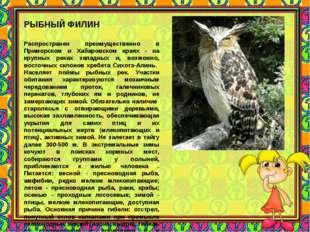 РЫБНЫЙ ФИЛИН Распространен преимущественно в Приморском и Хабаровском краях