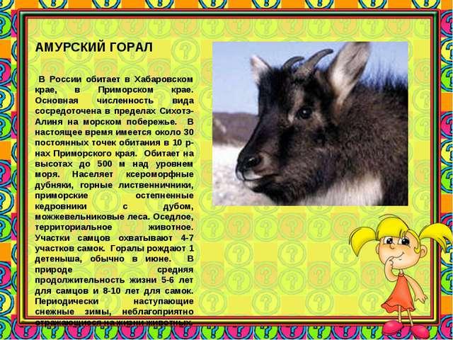 АМУРСКИЙ ГОРАЛ В России обитает в Хабаровском крае, в Приморском крае. Основн...