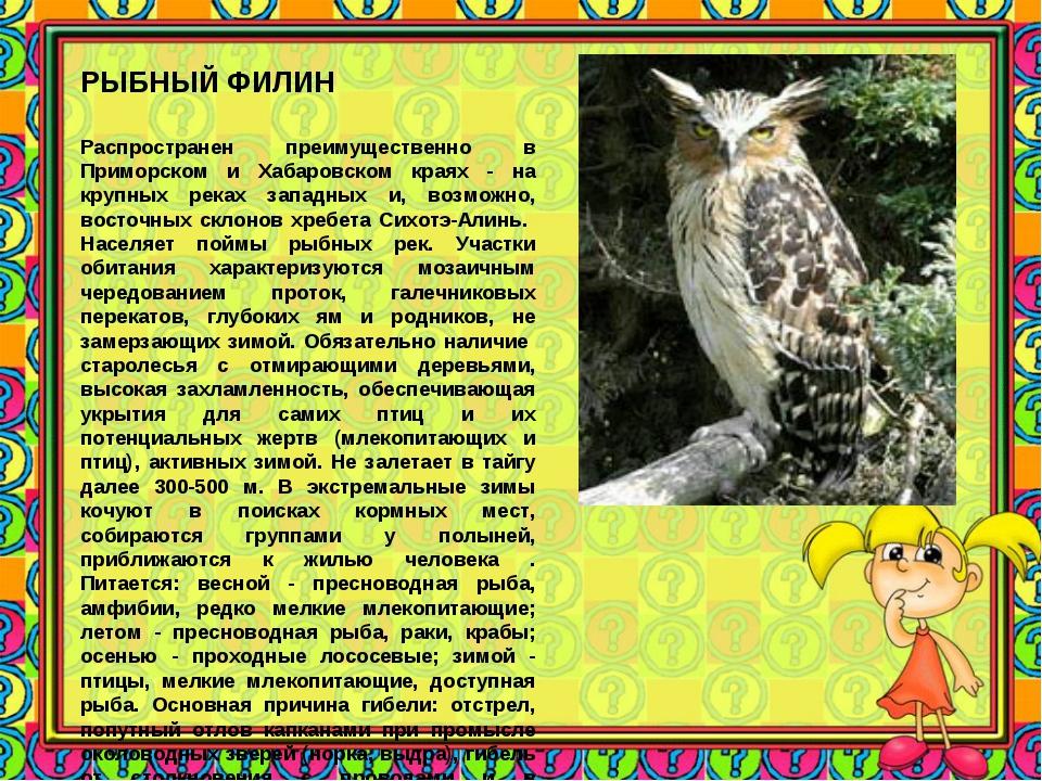 РЫБНЫЙ ФИЛИН Распространен преимущественно в Приморском и Хабаровском краях...