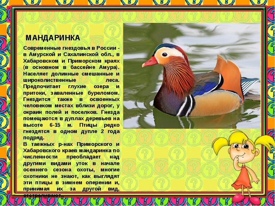 МАНДАРИНКА Современные гнездовья в России - в Амурской и Сахалинской обл., в...