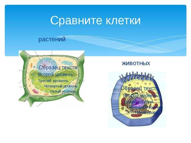 Сравните клетки растений животных