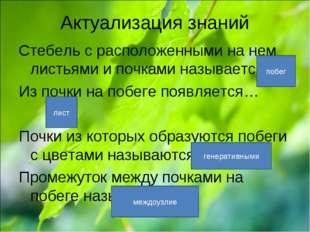 Актуализация знаний Стебель с расположенными на нем листьями и почками называ