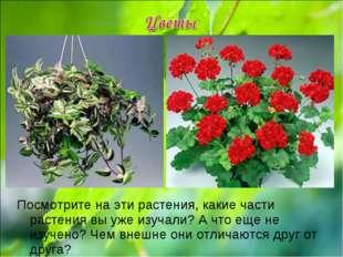 Посмотрите на эти растения, какие части растения вы уже изучали? А что еще не