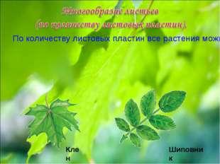 По количеству листовых пластин все растения можно разделить на две большие гр