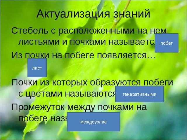 Актуализация знаний Стебель с расположенными на нем листьями и почками называ...