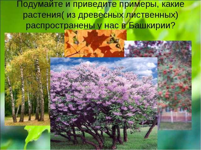 Подумайте и приведите примеры, какие растения( из древесных лиственных) распр...