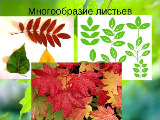 Многообразие листьев
