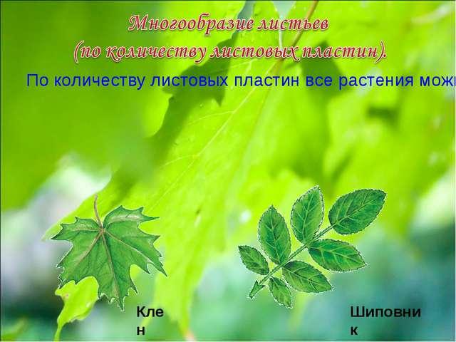 По количеству листовых пластин все растения можно разделить на две большие гр...