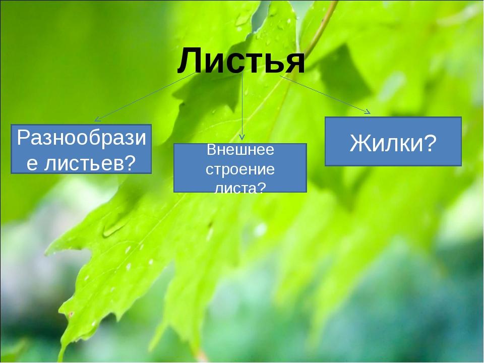 Листья Разнообразие листьев? Внешнее строение листа? Жилки?