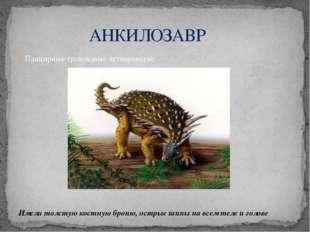 АНКИЛОЗАВР Панцирные травоядные четвероногие Имели толстую костную броню, ос