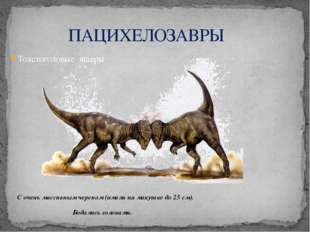 Толстоголовые ящеры С очень массивным черепом (имели на макушке до 25 см). Бо
