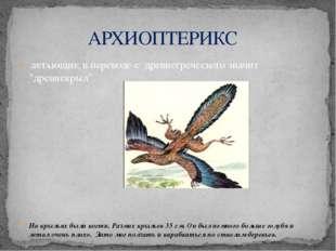 """ЛЕТАЮЩИЕ, в переводе с древнегреческого значит """"древнекрыл"""". На крыльях были"""