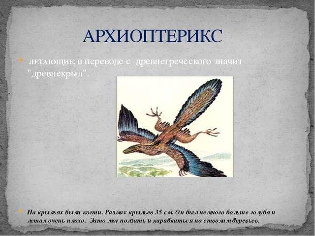 """ЛЕТАЮЩИЕ, в переводе с древнегреческого значит """"древнекрыл"""". На крыльях были..."""