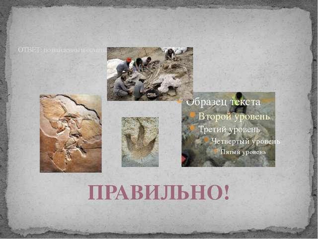 ОТВЕТ: по найденным останкам костей ПРАВИЛЬНО!