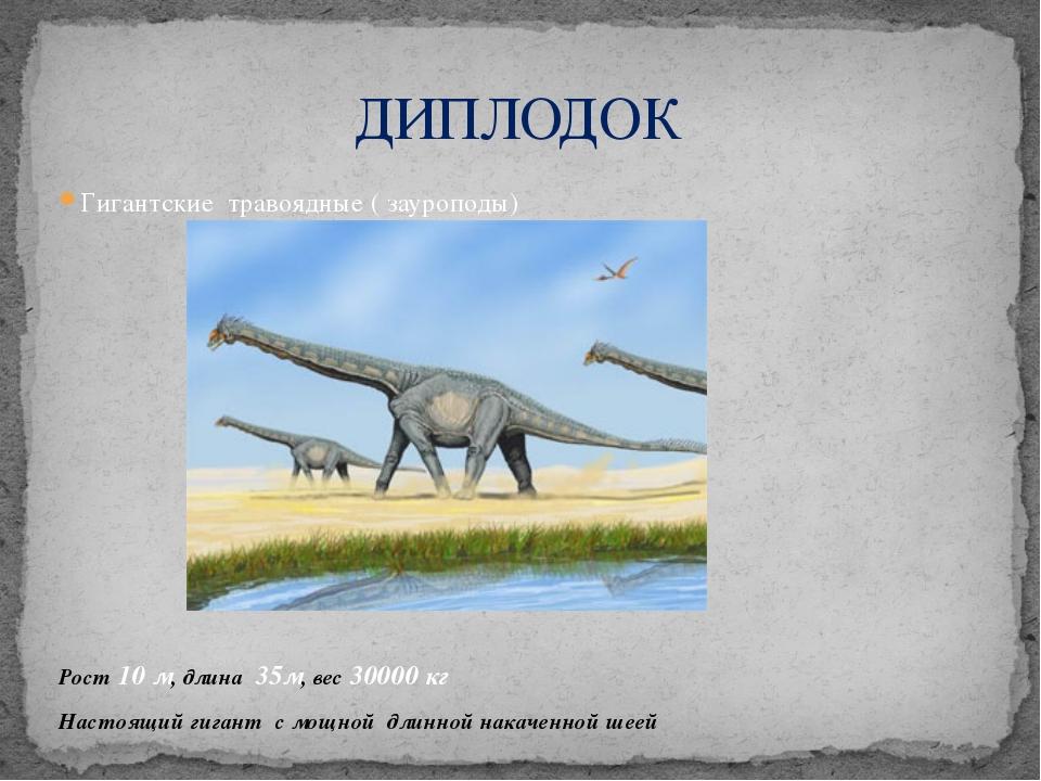 Гигантские травоядные ( зауроподы) Рост 10 м, длина 35м, вес 30000 кг Настоящ...