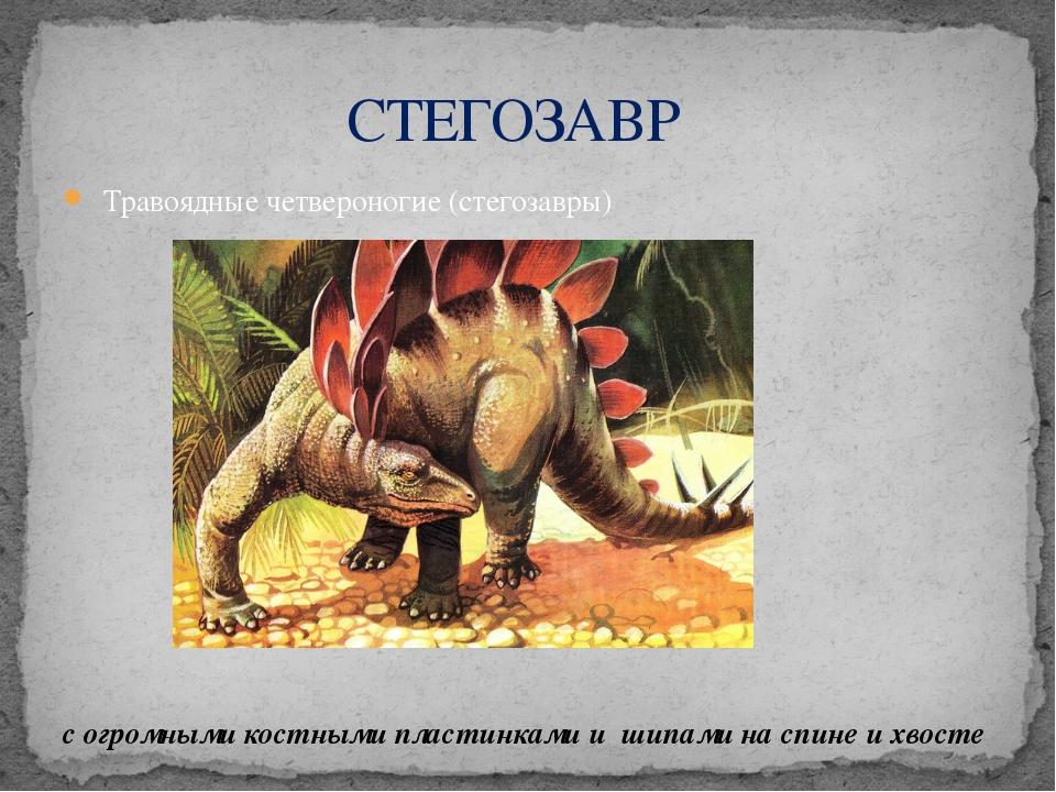 Травоядные четвероногие (стегозавры) с огромными костными пластинками и шипа...