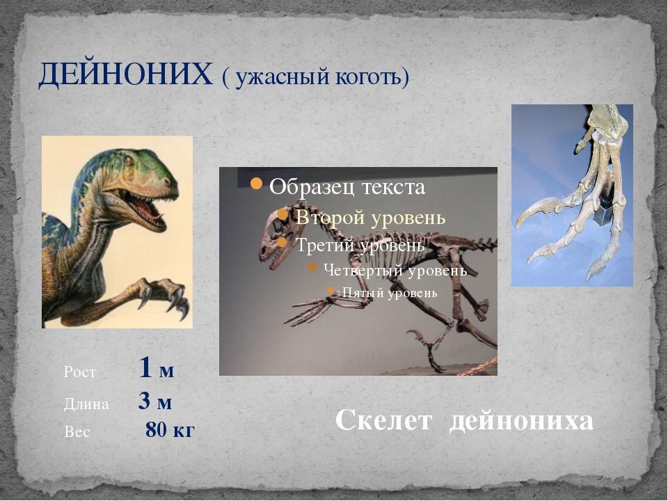 ДЕЙНОНИХ ( ужасный коготь) Рост 1 м Длина 3 м Вес 80 кг Скелет дейнониха
