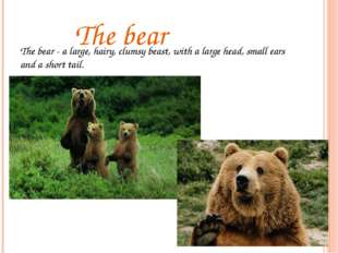 The bear The bear - a large, hairy, clumsy beast, with a large head, small e
