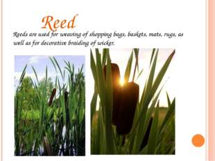 Reed Reeds are used for weaving of shopping bags, baskets, mats, rugs, as we