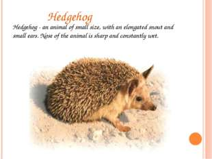 Hedgehog Hedgehog - an animal of small size, with an elongated snout and sma
