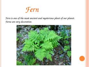 Fern Fern is one of the most ancient and mysterious plant of our planet. Fer
