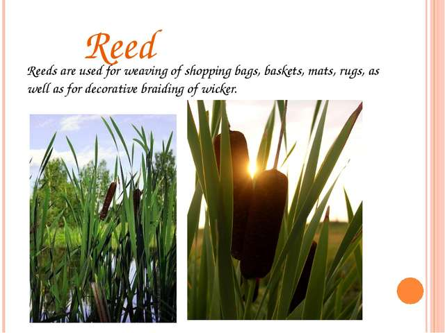 Reed Reeds are used for weaving of shopping bags, baskets, mats, rugs, as we...