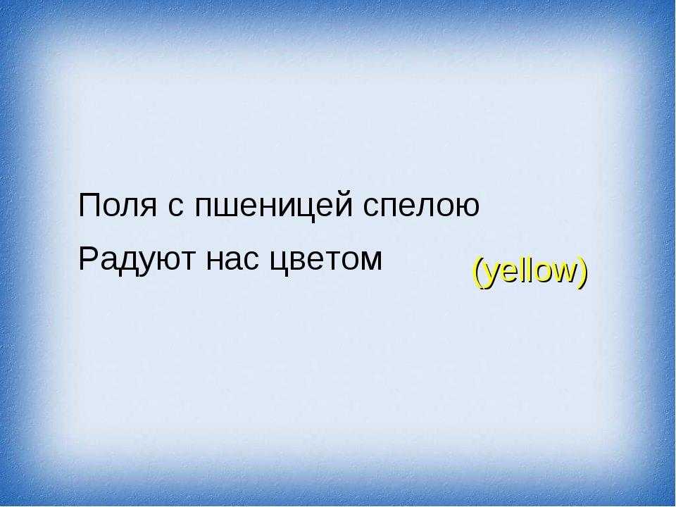 Поля с пшеницей спелою Радуют нас цветом (yellow)