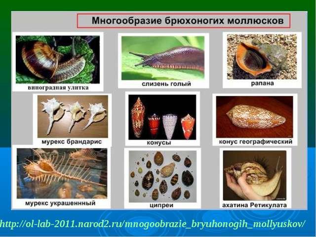 http://ol-lab-2011.narod2.ru/mnogoobrazie_bryuhonogih_mollyuskov/
