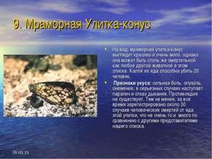 * 9. Мраморная Улитка-конус На вид, мраморная улитка-конус выглядит красиво и