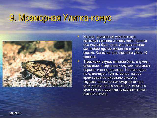 * 9. Мраморная Улитка-конус На вид, мраморная улитка-конус выглядит красиво и...