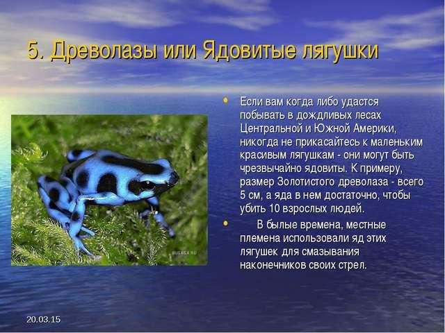* 5. Древолазы или Ядовитые лягушки Если вам когда либо удастся побывать в до...