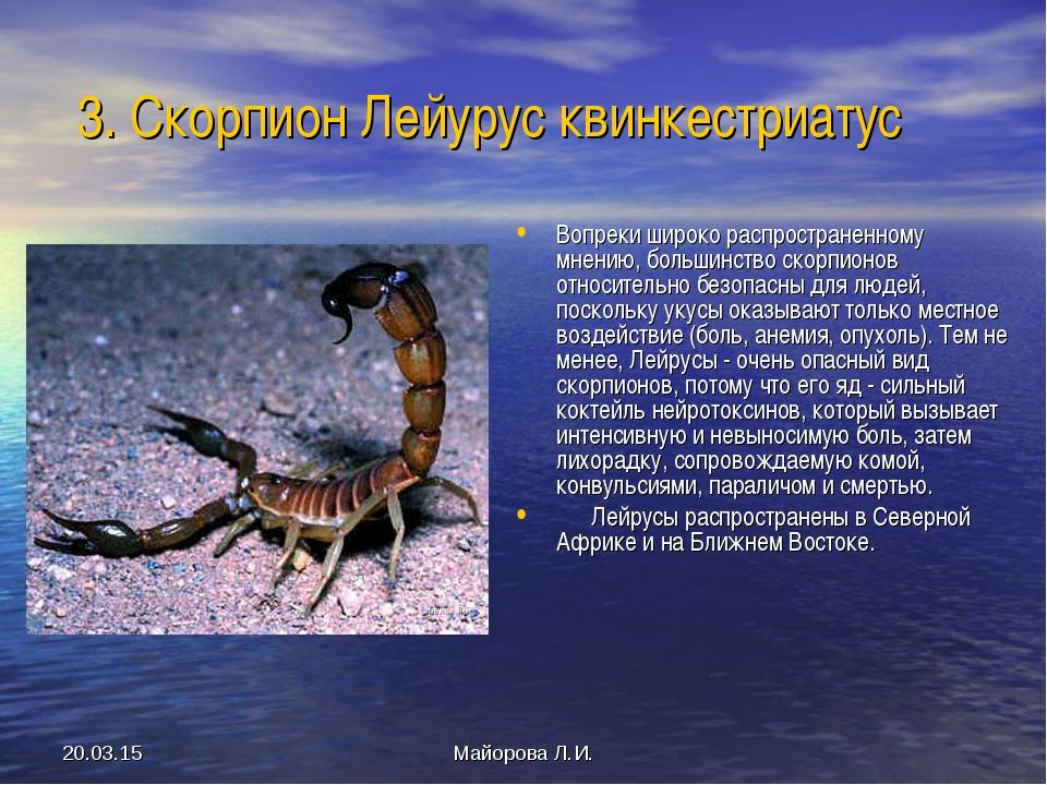 * Майорова Л.И. 3. Скорпион Лейурус квинкестриатус Вопреки широко распростран...
