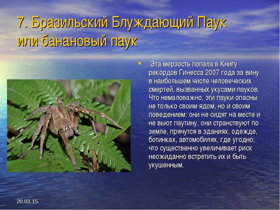 * 7. Бразильский Блуждающий Паук или банановый паук Эта мерзость попала в Кни...