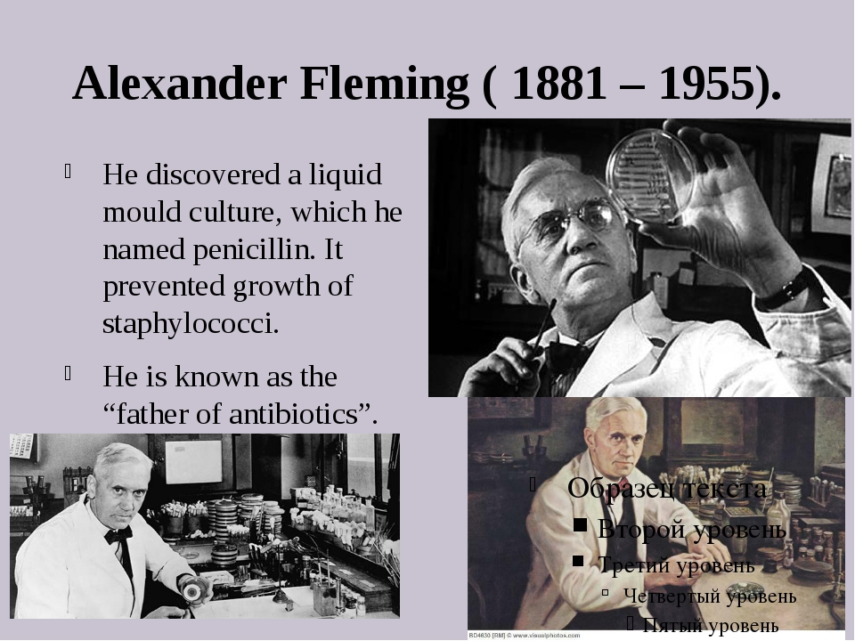Alexander Fleming ( 1881 – 1955). He discovered a liquid mould culture, which...