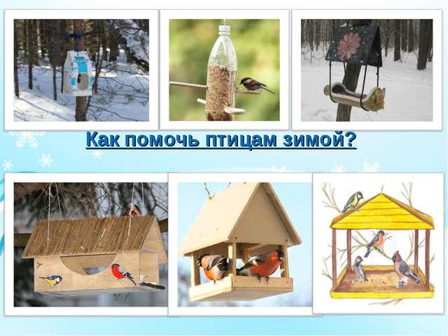 Как помочь птицам зимой?