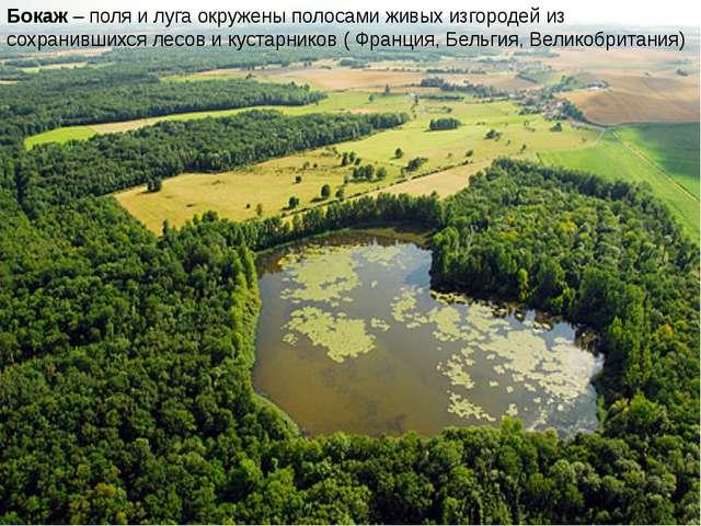 Бокаж – поля и луга окружены полосами живых изгородей из сохранившихся лесов...