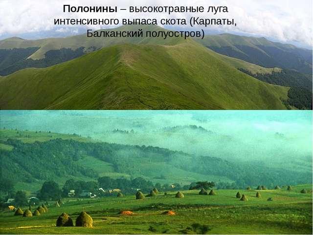 Полонины – высокотравные луга интенсивного выпаса скота (Карпаты, Балканский...