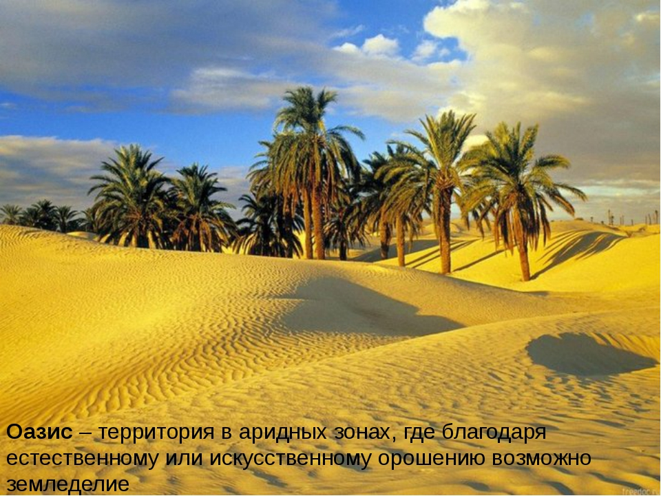 Оазис – территория в аридных зонах, где благодаря естественному или искусстве...